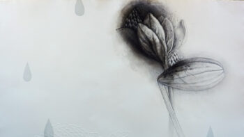 """Imagen de portada de Fotografías de la Exposición """"La sombra de la lluvia"""", de Mika MuraKami"""