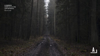 Imagen de portada de KATARZYNA PACHOLIK El último bosque