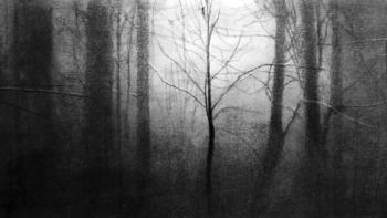 """Imagen de portada de Exposición """"El último bosque"""", de Katarzyna Pacholik"""