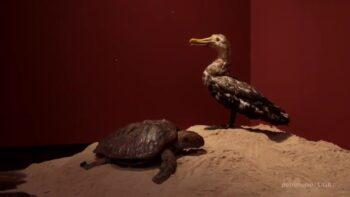 Imagen de portada de Selección Natural. De Isla Darwin al gabinete del Naturalista