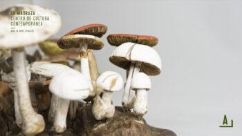 Imagen de portada de Simbiosis